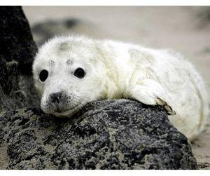 Тюлени украли у эстонских рыбаков миллион евро
