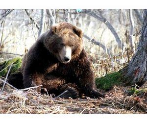 Медведи откроют сезон охоты в Иркутской области