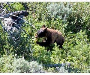 Томские медведи могут остаться без спячки