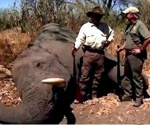 Канал NBC закрыл охотничье реалити-шоу
