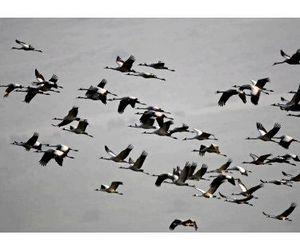 Весенняя охота на птиц - вне закона с 2015 года