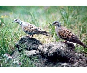 Адыгея - охота на степных птиц открыта