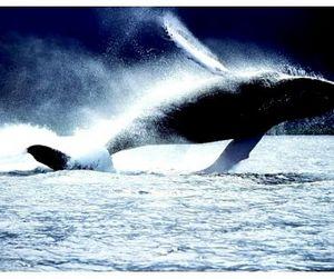 Япония самостоятельно отказалась от китобойного промысла
