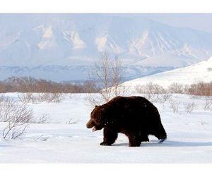 Сахалинские медведи выходят из спячки