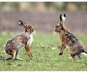 В Пензе зайцев не стреляют