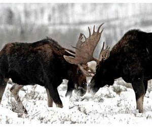Минприроды разработало стратегию развития охотничьего хозяйства