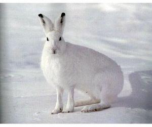 Подходит к концу сезон охоты на зайца-русака в Астраханской области