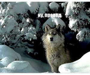 Новые Правила охоты в Башкирии приравняли волка к медведю