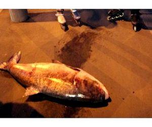 В центре Москвы поймана огромная рыба