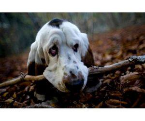 В Алтайском крае запрещена весенняя охота на дичь