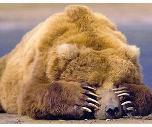 В Костромской области впервые откроется весенняя охота на медведя