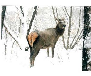 Кому в Якутии охотиться хорошо?
