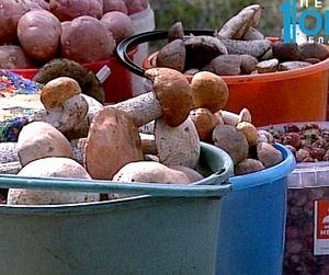 Небывалый урожай грибов в Челябинской области