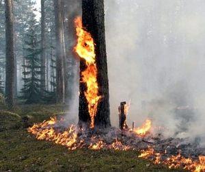 Леса Мари Эл по-прежнему остаются закрытыми