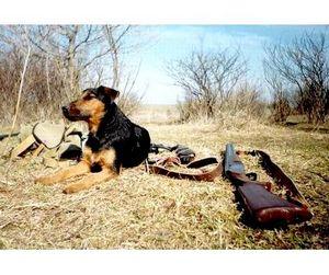 В Мордовии готовятся к охоте на пернатую дичь