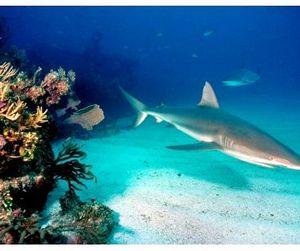 Западное Самоа запрещает акулий промысел