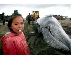 Чукотским китобоям выделили квоты