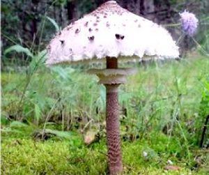 Первые отравления грибами в Винницкой области