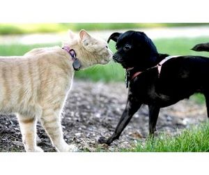 Штраф за кошку и собаку