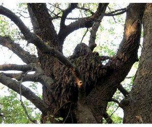 Охотник выстрелил в себя, падая с дерева