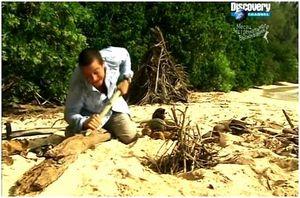 Сигнал бедствия на острове