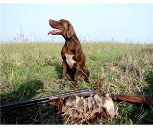 Весенняя охота в Подмосковье начнётся 20 апреля