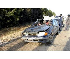 Незаконная охота привела к гибели автомобилиста