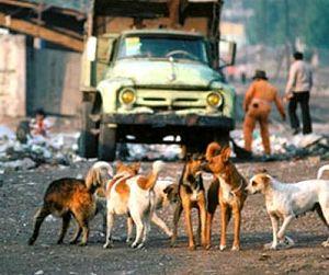 В Талдыкоргане уничтожены сотни бродячих собак