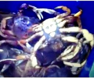 Американцы поймали краба с изображением бен Ладена