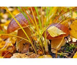 Правда и мифы о пользе грибов