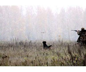 Пятая часть охотничьих угодий Тульской области - общедоступна