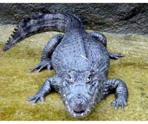 Екатеринбургские крокодилы
