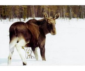 В Мурманске оценят как охота влияет на окружающую среду