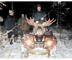 Объявлены квоты на добычу лося в Новосибирской области