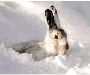 Восстанавливать популяцию зайцев в Кузбассе доверено московским русакам