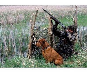 Охота на дичь в Астраханской области