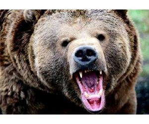 При встрече с диким медведем нужно громко петь и танцевать