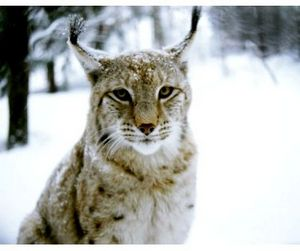 Татарстан готов к сезону охоты