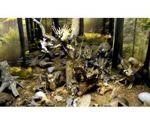 Музей охоты появится в Алтайском крае