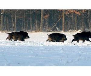 Снег открыл охоту на копытных в Тамбовской области