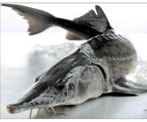 Открыта рыбалка в Башкирии