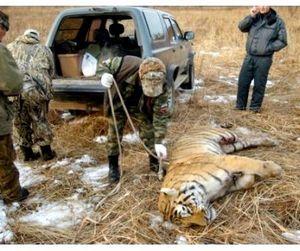 Сергей Иванов за скорейшее принятие закона об уголовной ответственности за добычу краснокнижных зверей
