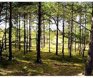 Простые правила поведения в лесу
