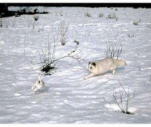 Близится сезон охоты на пушных в Прибайкалье