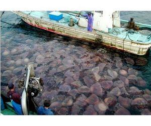 Французский биолог предупреждает развивающиеся страны о крахе промышленного рыболовства