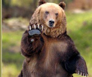В Тюмени разрешили охотиться на кабана и медведя