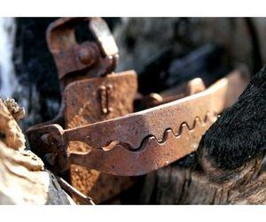 Совещание, посвященное гуманному отлову диких животных, пройдет в Якутии