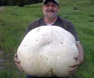 Гриб-рекордсмен найден в Канаде