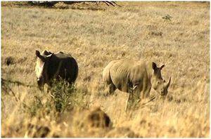 Как отпугнуть, спастись от диких животных