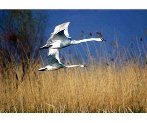 В Астраханской области сезон охоты переносится
